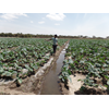 Improved irrigation management and agricultural practices in Ziway, Ethiopia